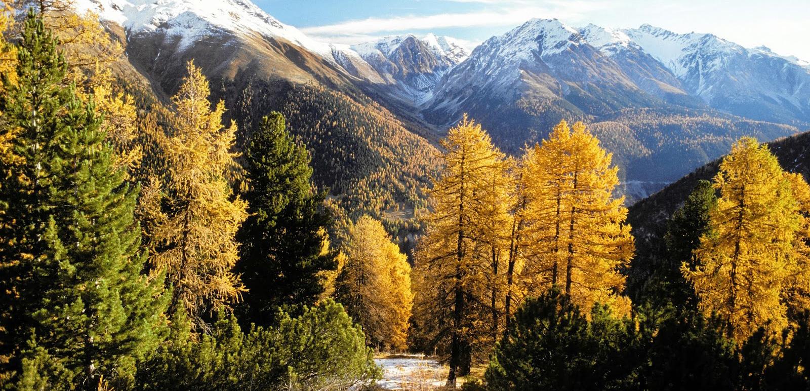 Crusch Alba Zernez - Schweizer Nationalpark